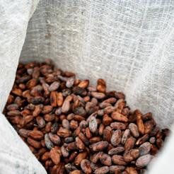 Beniano-kakaobønner